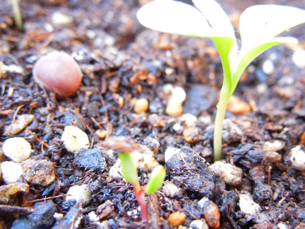 植物の種50代女性これからの暮らし方