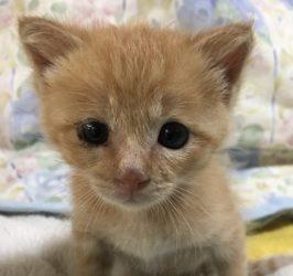 ネコの鳴き方赤ちゃんネコ