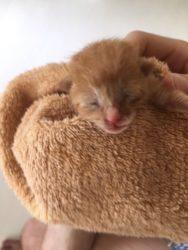 産まれたばかりの猫かわいい