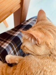 猫の飼い方膝乗り猫